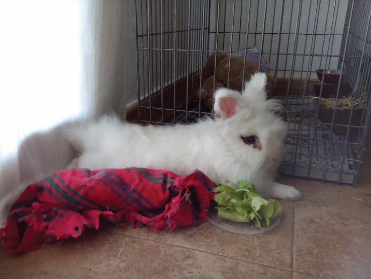 Manolito rescued rabbit