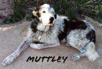 mutley