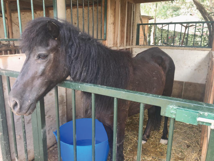 Female pony rescued 12th August 2019.