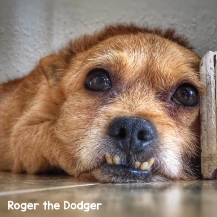 Roger the Dodger