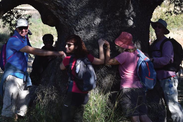 Giant Oak at Coy