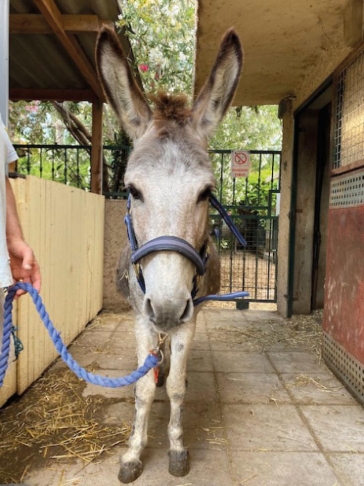 Horacio rescued Monday 1st June 2020