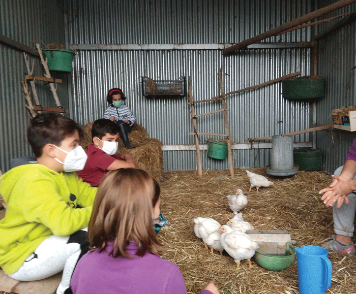 Pony Club Kids Learn About The Chickens