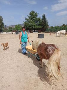 Sharon + The Yellow Wheelbarrow