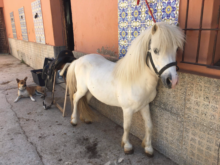 Why on earth this beautiful pony has been on death row in the Pererra is beyond me.   His fate looked very bleak.   He's now happy and safe with AAR. We've called him Flash.