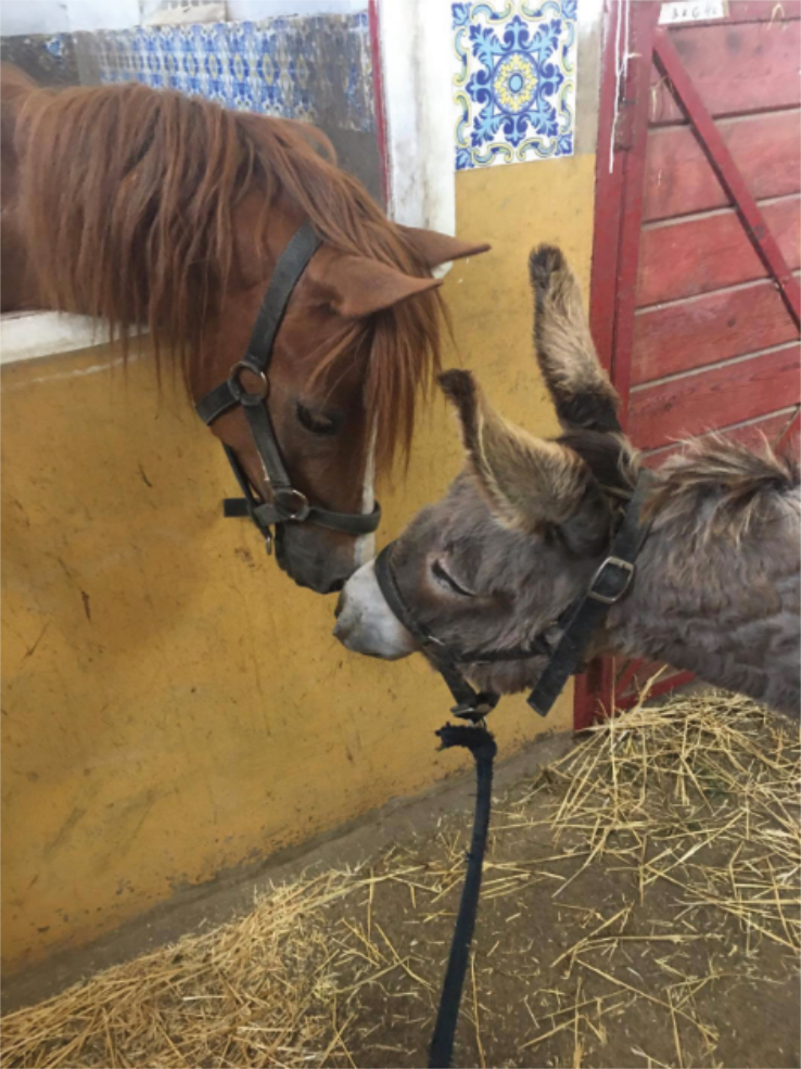 Platero saying Hola to Honey ... I hope they will be friends